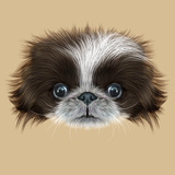 Illustrated Portrait of Pekingese Dog