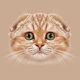 Illustration Portrait of Scottish Fold Cat the Cute Tabby Peach Cat with Green Eyes