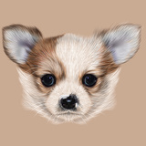 Illustrative Portrait of Chihuahua Puppy Cute Long Hair Bi-Colour Puppy