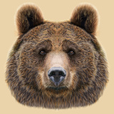 Illustrated Portrait of Bear on Beige Background