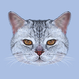 Illustrative Portrait of Scottish Straight Cat Cute Domestic Tabby Cat with Orange Eyes