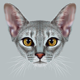 Illustrative Portrait of Abyssinian Cat Cute Breed of Domestic Short Haired Cat with a Distinctive