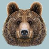 Illustrated Portrait of Bear on Blue Background