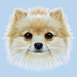 Illustrative Portrait of Pom Pom Cute Head of a White Pomeranian Spitz Dog