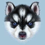 Illustrative Portrait of a Husky Puppy Cute Head of Bicolour Puppy with Blue Eyes