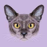 Illustrated Portrait of Burmese Cat