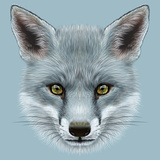 Illustrative Portrait of Grey Fox Cute Face of Fox with Silver Colour of Coat