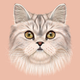 Illustrated Portrait of Persian Cat
