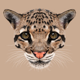 Illustrative Portrait of Clouded Leopard