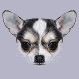 Illustrative Portrait of Chihuahua Puppy Cute Bi-Colour Little Dog (Black & White)