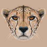 Illustrative Portrait of a Cheetah the Cute Face of a Cheetah