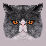 Illustrative Portrait of Maine Coon Cute Bi-Colour Domestic Cat with Green Eyes