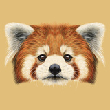 Illustrated Portrait of Red Panda