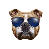 Original Drawing of English Bulldog with Sunglasses Isolated on White Background