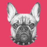 Original Drawing of French Bulldog with Collar Isolated on Colored Background