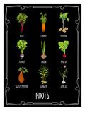 Garden Roots