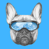 Portrait of French Bulldog with Ski Goggles Hand Drawn Illustration