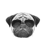 Original Drawing of Pug Dog with Sunglasses Isolated on White Background