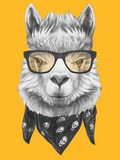 Portrait of Lama with Glasses and Scarf Hand Drawn Illustration