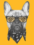 Portrait of French Bulldog with Glasses and Scarf Hand Drawn Illustration
