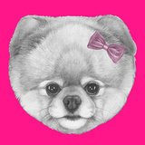 Original Drawing of Pomeranian with Pink Bow Isolated on Colored Background