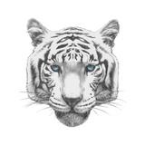 Original Drawing of Tiger Isolated on White Background