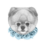 Original Drawing of Pomeranian with Floral Wreath Isolated on White Background