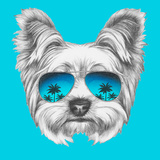Portrait of Yorkshire Terrier Dog with Mirror Sunglasses Hand Drawn Illustration