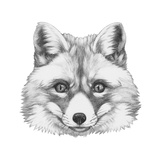Original Drawing of Fox Isolated on White Background