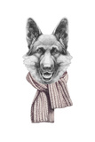 Portrait of German Shepherd with Scarf Hand Drawn Illustration