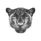 Portrait of Panther. Hand Drawn Illustration. Reproduction d'art par Victoria_novak