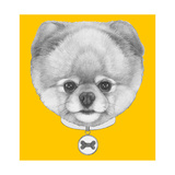 Original Drawing of Pomeranian Dog with CollarIsolated on Colored Background