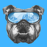 Portrait of English Bulldog with Ski Goggles Hand Drawn Illustration