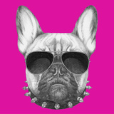 Original Drawing of French Bulldog with Collar and Sunglasses Isolated on Colored Background