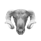 Original Drawing of Ram Isolated on White Background