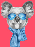Portrait of Koala with Scarf and Sunglasses Hand Drawn Illustration