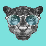 Portrait of Panther with Glasses Hand Drawn Illustration