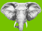 Portrait of Elephant with Glasses Hand Drawn Illustration