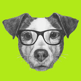 Original Drawing of Jack Russell with Glasses Isolated on Colored Background