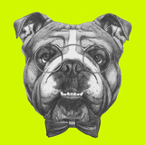 Original Drawing of English Bulldog with Glasses and Bow Tie Isolated on Colored Background