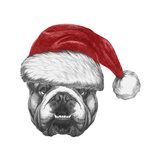 Portrait of English Bulldog with Santa Hat Hand Drawn Illustration