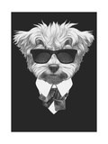 Portrait of Maltese Poodle in Suit Hand Drawn Illustration
