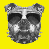 Original Drawing of English Bulldog with Collar and Sunglasses Isolated on Colored Background