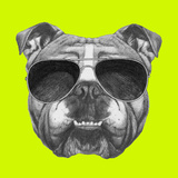 Original Drawing of English Bulldog with Sunglasses Isolated on Colored Background