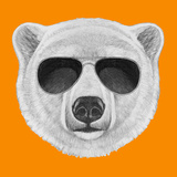 Portrait of Polar Bear with Sunglasses Hand Drawn Illustration