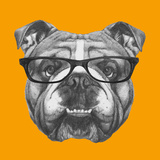 Original Drawing of English Bulldog with Glasses Isolated on Colored Background