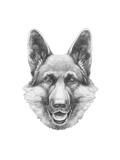 Portrait of German Shepherd Hand Drawn Illustration