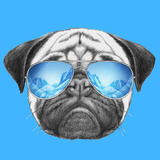 Portrait of Pug Dog with Mirror Sunglasses Hand Drawn Illustration