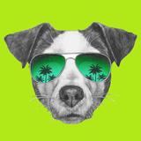 Original Drawing of Jack Russell with Mirror Sunglasses Isolated on White Background
