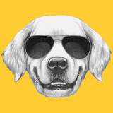 Portrait of Golden Retriever with Sunglasses Hand Drawn Illustration